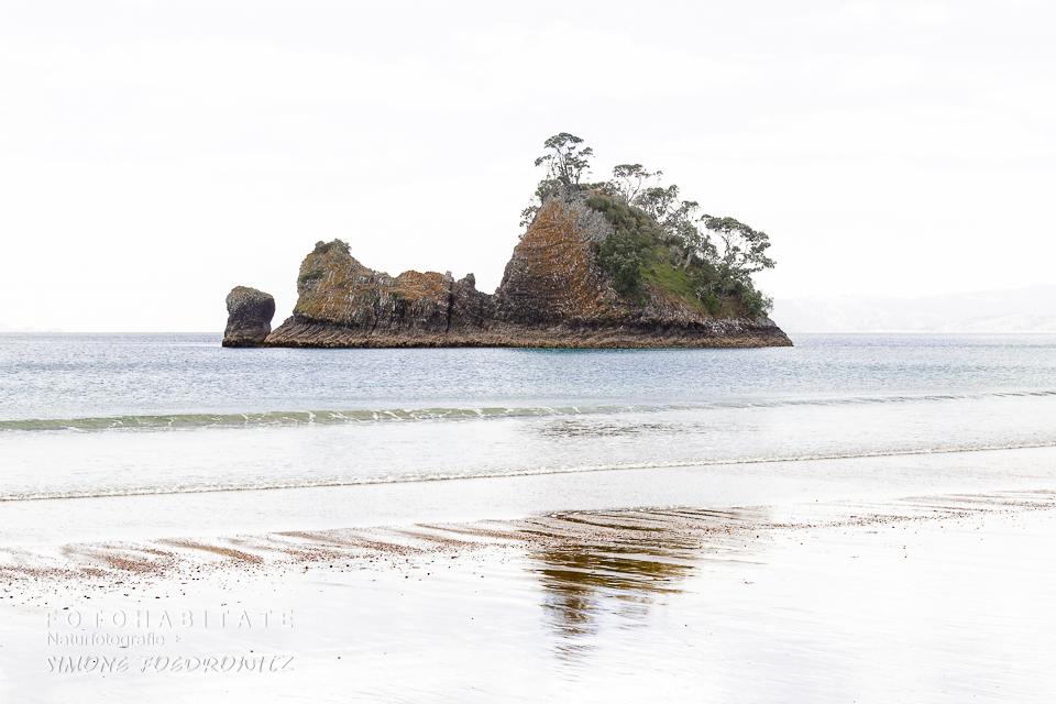 Baumbewachsener Felden im Meer am Strand