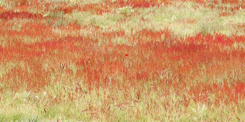 rot bühendes Feld